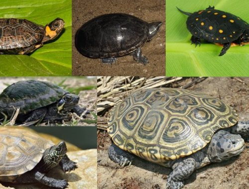 turtles that stay small